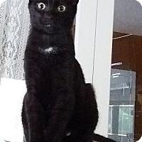 Adopt A Pet :: Twizzler - Lenhartsville, PA