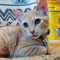 Adopt A Pet :: Buttercup - Perryville, MO