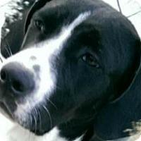 Adopt A Pet :: Tilly - Albemarle, NC