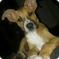 Adopt A Pet :: Sheldon - Union Grove, WI