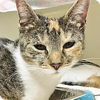 Adopt A Pet :: Fleur & Bijou - Salisbury, MA