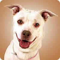 Adopt A Pet :: Sierra - Prescott, AZ