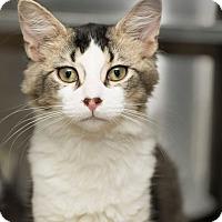 Adopt A Pet :: Dean Winchester - Lombard, IL