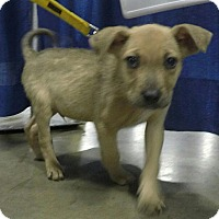Adopt A Pet :: Chucky-Adopted! - Detroit, MI