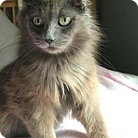 Adopt A Pet :: Brianna - Rochester, MI