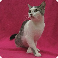 Adopt A Pet :: Vivien - Redwood Falls, MN