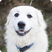 Adopt A Pet :: Ellie - Louisville, IL