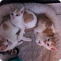 Adopt A Pet :: The Joy Crew - Arlington, VA
