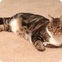 Adopt A Pet :: Kitty - Homewood, AL