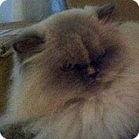 Adopt A Pet :: Delia - Columbus, OH