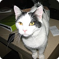 Adopt A Pet :: Stewie - Fairbury, NE