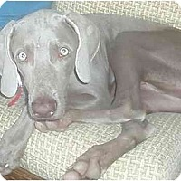 Adopt A Pet :: Sweet Pea - Eustis, FL