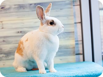 Rhinelander Mix for adoption in Los Angeles, California - Confettie