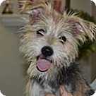 Adopt A Pet :: Maddie Jo