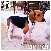 Adopt A Pet :: Tanner - Chicago, IL