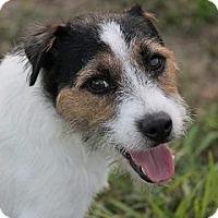 Adopt A Pet :: LUCKY - Terra Ceia, FL