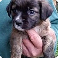 Adopt A Pet :: Barnum - Gainesville, FL