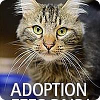 Adopt A Pet :: Percival - Novato, CA