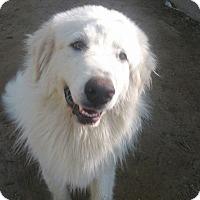 Adopt A Pet :: Tobin - Adopted! - Ascutney, VT