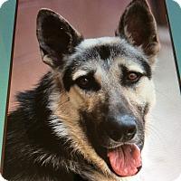 Adopt A Pet :: FREEDOM VON FREUND - Los Angeles, CA