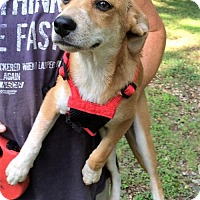 Adopt A Pet :: Jessica Destin - Staunton, VA