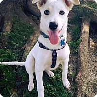 Adopt A Pet :: Kesi Pup - Kianna - San Diego, CA