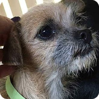 Terrier (Unknown Type, Medium) Mix Dog for adoption in Sunnyvale, California - Daisy