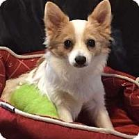 Adopt A Pet :: Bold - Sudbury, MA