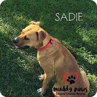 Boxer Mix Dog for adoption in Council Bluffs, Iowa - Sadie - Pending Adoption