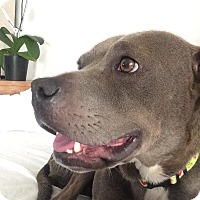 Adopt A Pet :: Heather - Santa Monica, CA