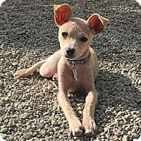 Adopt A Pet :: Tessa - adoption pending - Pleasanton, CA