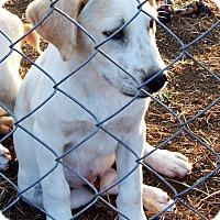 Adopt A Pet :: Quinn - Waller, TX
