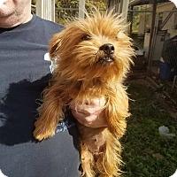 Adopt A Pet :: Ella - ST LOUIS, MO