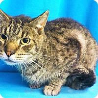 Adopt A Pet :: Cal - Waldorf, MD