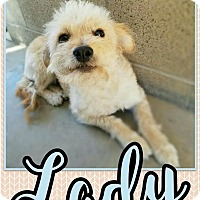 Adopt A Pet :: Lady - Edwards AFB, CA