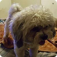 Adopt A Pet :: Kassidy - Thousand Oaks, CA