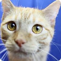 Adopt A Pet :: Penn - Winston-Salem, NC
