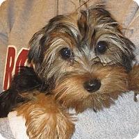 Adopt A Pet :: Honey Bea - Greenville, RI