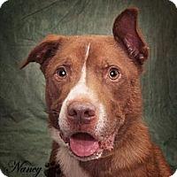Adopt A Pet :: Wyatt - Bedford, TX