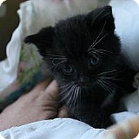 Adopt A Pet :: Flower - Grand Rapids, MI