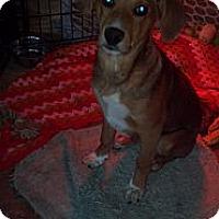 Adopt A Pet :: Bubby - Morgantown, WV