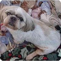Adopt A Pet :: Kilauea - Phoenix, AZ