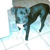 Adopt A Pet :: Tazz-loving pup - Sacramento, CA