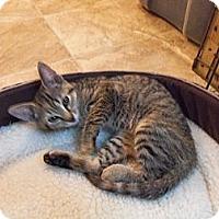 Adopt A Pet :: Casey - Catasauqua, PA