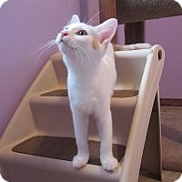 Adopt A Pet :: Sugar Cookie - Grand Chain, IL