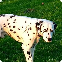Adopt A Pet :: Dexter - Newcastle, OK