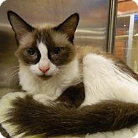 Adopt A Pet :: Maya - The Colony, TX