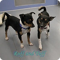 Adopt A Pet :: Ruff and Tuff - Winter Haven, FL