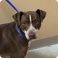 Adopt A Pet :: Freckles - Woodward, OK