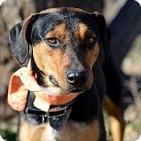 Adopt A Pet :: Burt - Corrales, NM